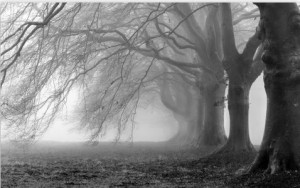 Träd grått