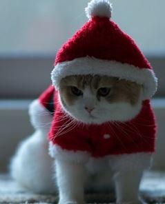 Jultomte 2 - katt