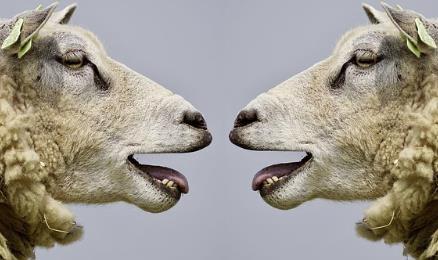 Lammen talar