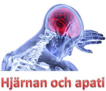 Hjärnan och apati
